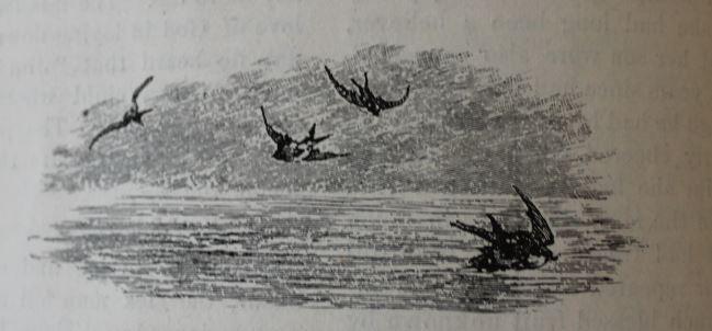 Ocean and birds