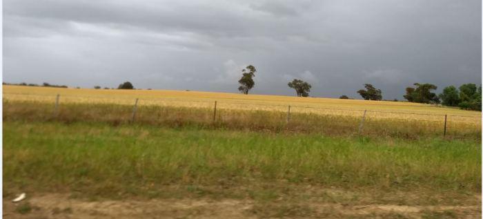 Wheat field inland Australia