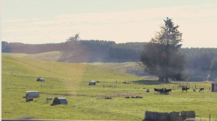 Rural scene near Launceston